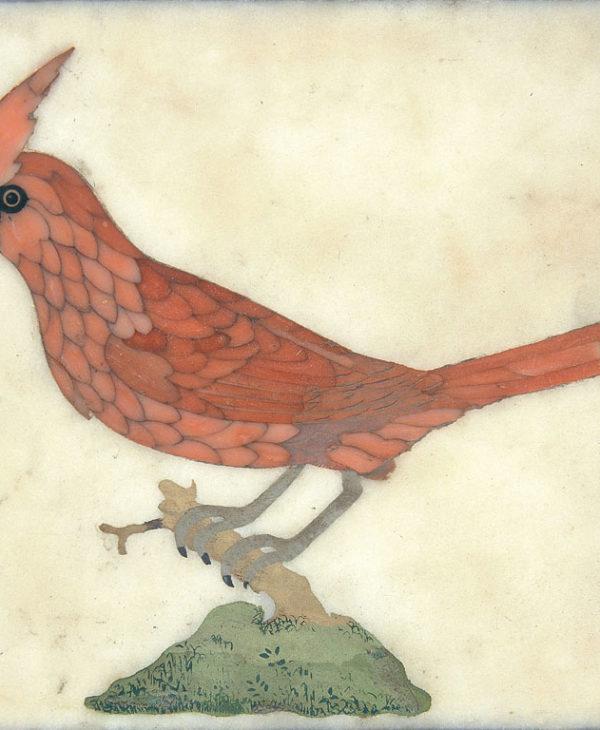 A Bird: Red Cardinal